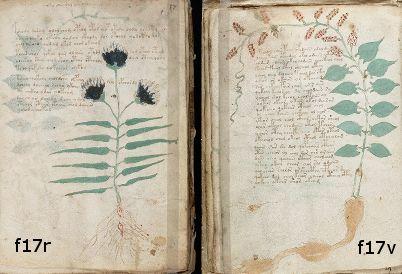Voynich Manuscript f17r and f17v, side-by-side