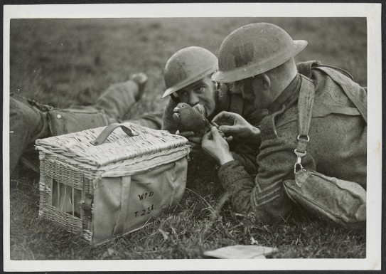 Attaching a message to a bird for dispatch