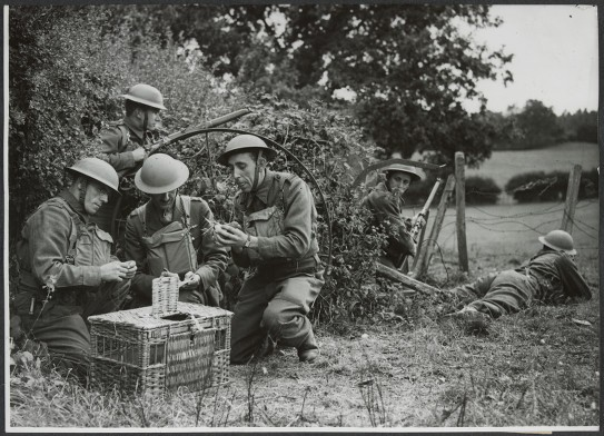 Officer in the field writing a message for dispatch by pigeon