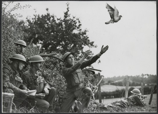 Releasing the pigeon