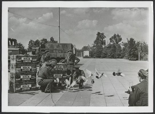 Last flight of B.L.A. war pigeons